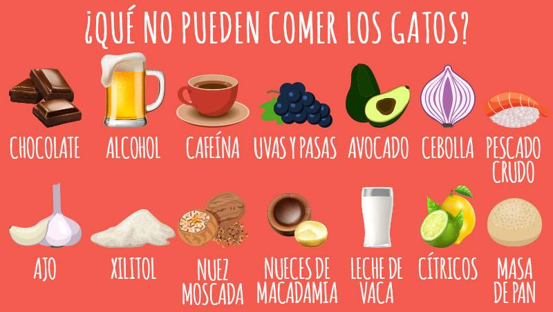 animigo-es-cat-not-eat-info