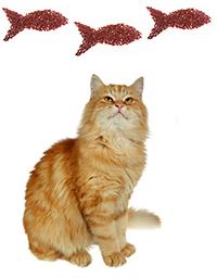 Cómo Prevenir Las Afecciones De La Piel En Gatos