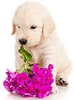 Alergia Ambiental en Perros