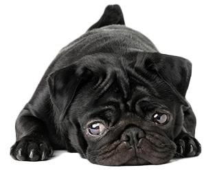 ¿Qué Es Ansiedad En Perros?
