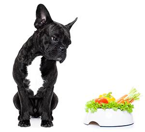 Suplementos Para La Piel Del Perro