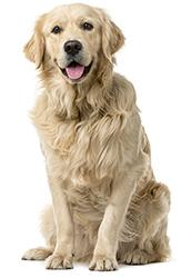 Prevención De La Ansiedad En Perros