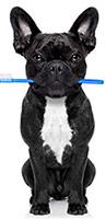 Cepillando Los Dientes De Tu Perro