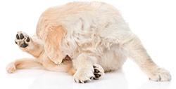 Alergias de Perros en la Piel