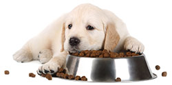 Alergias Alimentarias en Perros