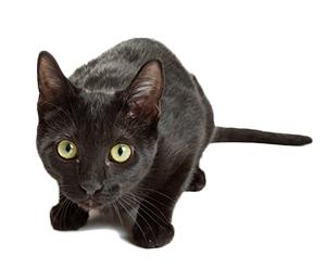 ¿Qué Es La Ansiedad De Gato?