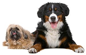 Cómo Prevenir Las Enfermedades De La Piel Del Perro