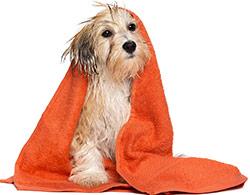 Dando Un Baño a Tu Perro
