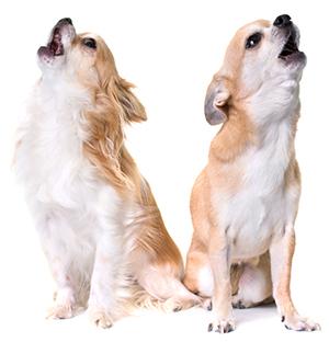 Síntomas De Ansiedad En Perros