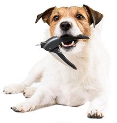 Cortando Las Uñas De Tu Perro