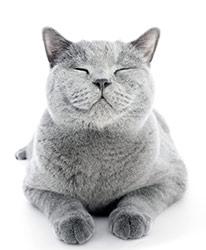 Cómo Reducir Los Síntomas de Alergia en Gatos