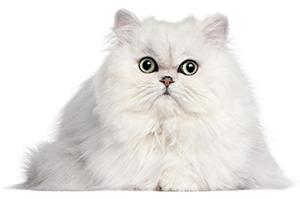 Cómo Cuidar De La Piel Y El Pelaje De Su Gato