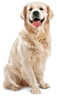 Cómo Cuidar La Piel Y El Pelaje De Su Perro