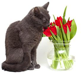Alergia a Factores Ambientales en Gatos