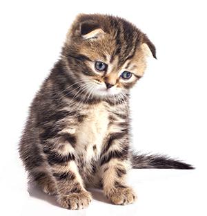 Síntomas De La Ansiedad En Gatos