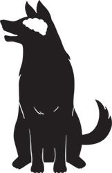 Tamaño y Función Del Cerebro De Un Perro