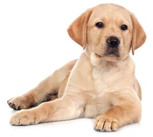 Suplementos de Hígado, Riñón y Páncreas Para Perros
