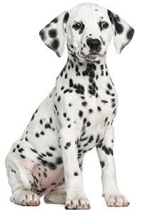 ¿Cuáles Son Las Funciones del Páncreas En Tu Perro?