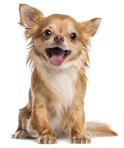 ¿Qué Son Las Vitaminas En Los Perros?