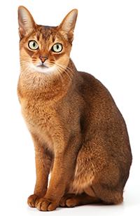 ¿Qué Función Tiene Los Riñones En Un Gato?