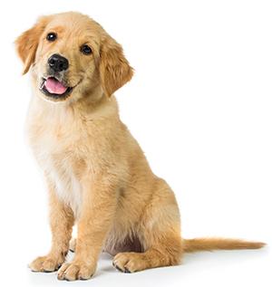 ¿Cómo Cuidar De La Piel De Tu Perro?