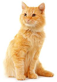 Cómo Prevenir Enfermedad En Las Encías De Un Gato