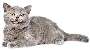 Luego, ¿Cuál Es La Mejor Manera De Librarse De Las Garrapatas En Los Gatos?