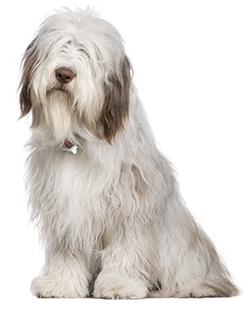 Remedios Caseros Antipulgas Para perros