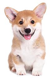Los Perros y Sus Emociones