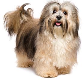 ¿Cuáles Son Los Problemas De Piel En Perros?