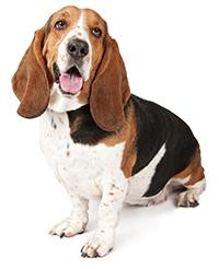 Sarro En los Dientes De Un Perro