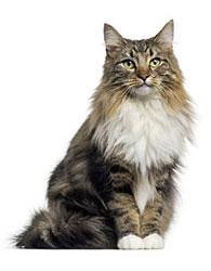 Tratamiento Antipulgas Y Garrapatas Para Gatos