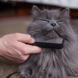 ¿Cómo acicalar a un gato?