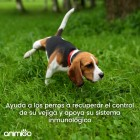 /images/product/thumb/urinary-aids-for-dogs-4-es-new.jpg