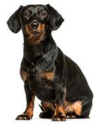 Conclusiones Sobre La Diarrea Canina