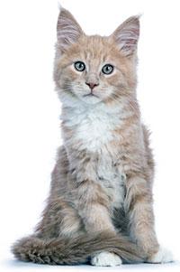 ¿Cuáles Son Los Problemas De Piel En Los Gatos?