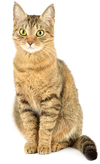 ¿Qué Es Ansiedad Por Separación En Gatos?