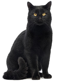 ¿Cómo Cuidar De La Piel De Su Gato?