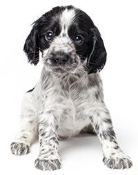 Síntomas De Estreñimiento En Perros