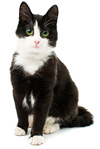 Suplementos Antialérgicos Para Gatos