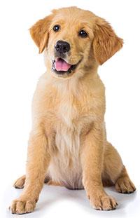 Suplementos Contra El  Estreñimiento Para Perros