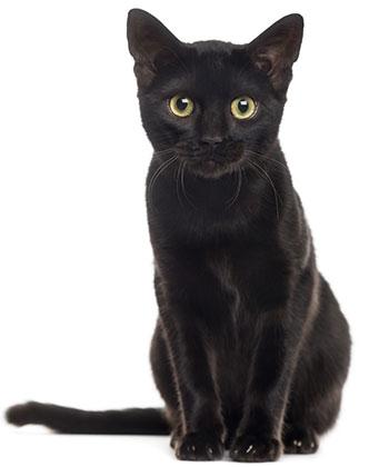 Tratamiento Anti Gusanos En Gatos