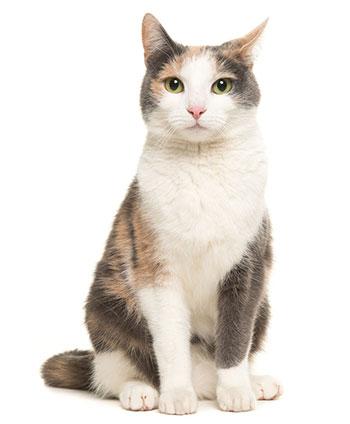 ¿Qué Son Los Gusanos En Los Gatos?
