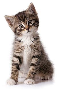 Signos Y Síntomas De Ansiedad Por Separación En Los Gatos