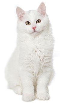 Conclusiones Sobre La Ansiedad En Gatos Debido A La Separación