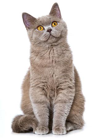 ¿Qué Es Alergia En Los Gatos?