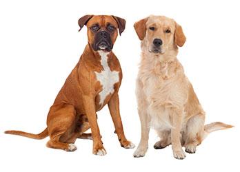 ¿Cuáles Son Los Síntomas Diarreicos En Perros?