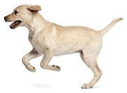 Glucosamina Para Perros ¿Por Qué Es Importante?